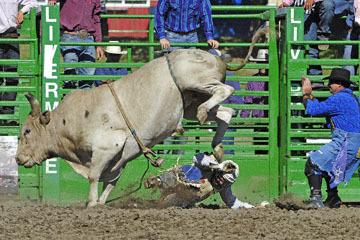 blog (6x4@300) Yoko 76 Livermore, Bull Riding 11, Brady Williams (NS LaGrange, CA)_DSC8138-6.10.17.(3).jpg