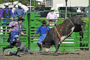 blog (6x4@300) Yoko 76 Livermore, Bull Riding 12, Will Morris (NS Reno, NV)_DSC8162-6.10.17.(3).jpg