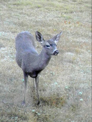 blog CP9 Day Break, Deer_DSCN0694-10.28.18.jpg