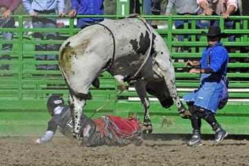 blog (6x4@300) Yoko 76 Livermore, Bull Riding 13, Ricky Hallam (NS Norco, CA)_DSC8175-6.10.17.(3).jpg