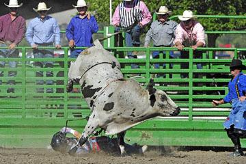blog (6x4@300) Yoko 76 Livermore, Bull Riding 13, Ricky Hallam (NS Norco, CA)_DSC8173-6.10.17.(3).jpg
