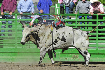 blog (6x4@300) Yoko 76 Livermore, Bull Riding 13, Ricky Hallam (NS Norco, CA)_DSC8171-6.30.17.(3).jpg