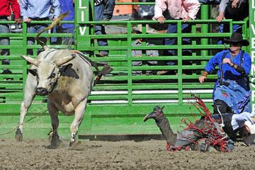 blog (6x4@300) Yoko 76 Livermore, Bull Riding 14, Emiliano Garcia (NS Hosteria ?, CA)_DSC8197-6.10.17.(3).jpg