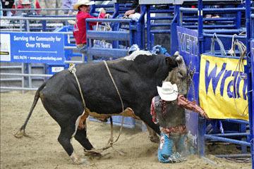 blog (4x6@300) Yoko 33 Gold Country Pro Rodeo, Bull Riding 8, Enrique Sanchez (NS