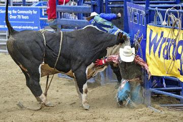 blog (6x4@300) Yoko 33 Gold Country Pro Rodeo, Bull Riding 8, Enrique Sanchez (NS