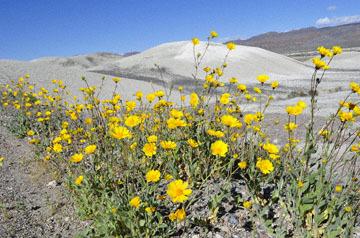 blog 14 Beaty, NV to Death Valley, CA~374W-190E, Corkscrew Peak to Badwater Basin, Salsbury Pass to 178S Shoshone, CA_DSC8025-3.23.17.jpg