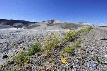 blog 14 Beaty, NV to Death Valley, CA~374W-190E, Corkscrew Peak to Badwater Basin, Salsbury Pass to 178S Shoshone, CA_DSC8023-3.23.17.jpg