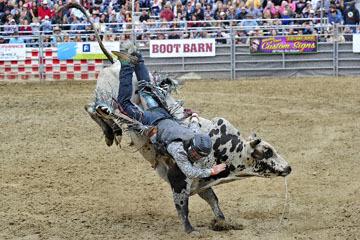 blog (6x4@300) Yoko 33 Gold Country Pro Rodeo, Bull Riding 13, Billy Quillan (NS