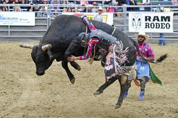 blog (6x4@300) Yoko 33 Gold Country Pro Rodeo, Bull Riding 12, ? (NS