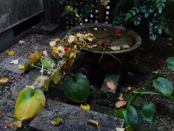 2018年11月12~13日 南郷旅館 庭の花