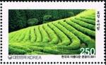 韓国・宝城茶畑