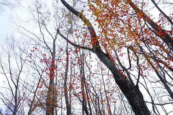 11林道沿い181102
