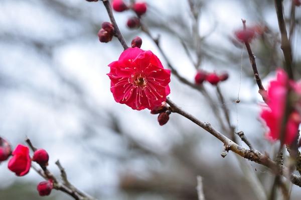 2綱敷天満神社190115