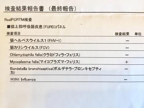 IMG_7147_・育キィ髮・ク医∩・雲convert_20181109090817