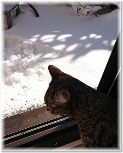 001-雪とすず190121-1