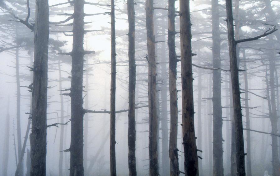 霧の原生林1