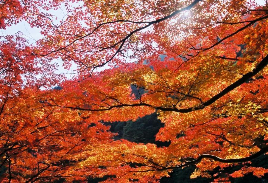 嵐山秋景02