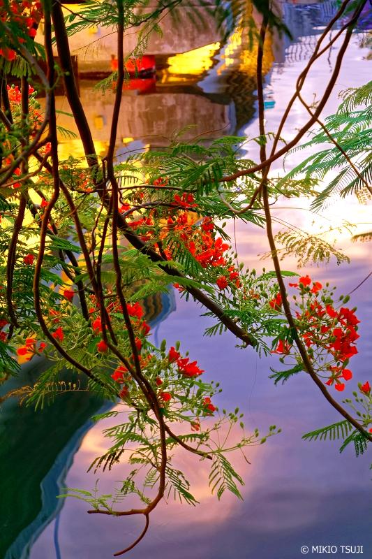 絶景探しの旅 - 0760 夜明けの愛河の赤い花 (台湾 高雄市)