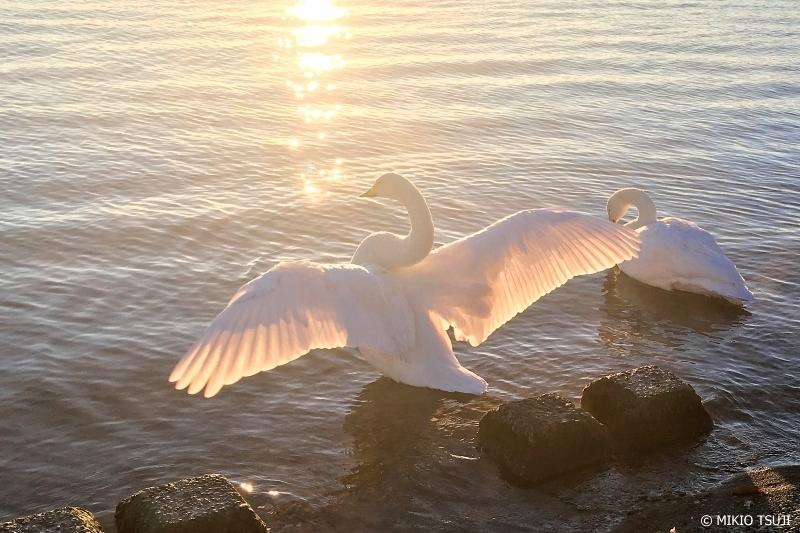 絶景探しの旅 - 0788 キラキラ星降るハクチョウの湖 (斜路湖 北海道 弟子屈町)