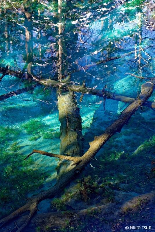 絶景探しの旅 - 0807 コバルトブルーの神の子池に沈む倒木 (北海道 清里町)